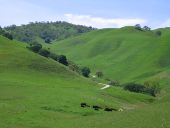 undeveloped hills in back of Antioch
