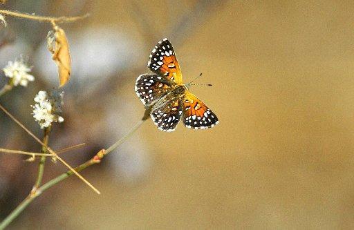 wildlife preservation02
