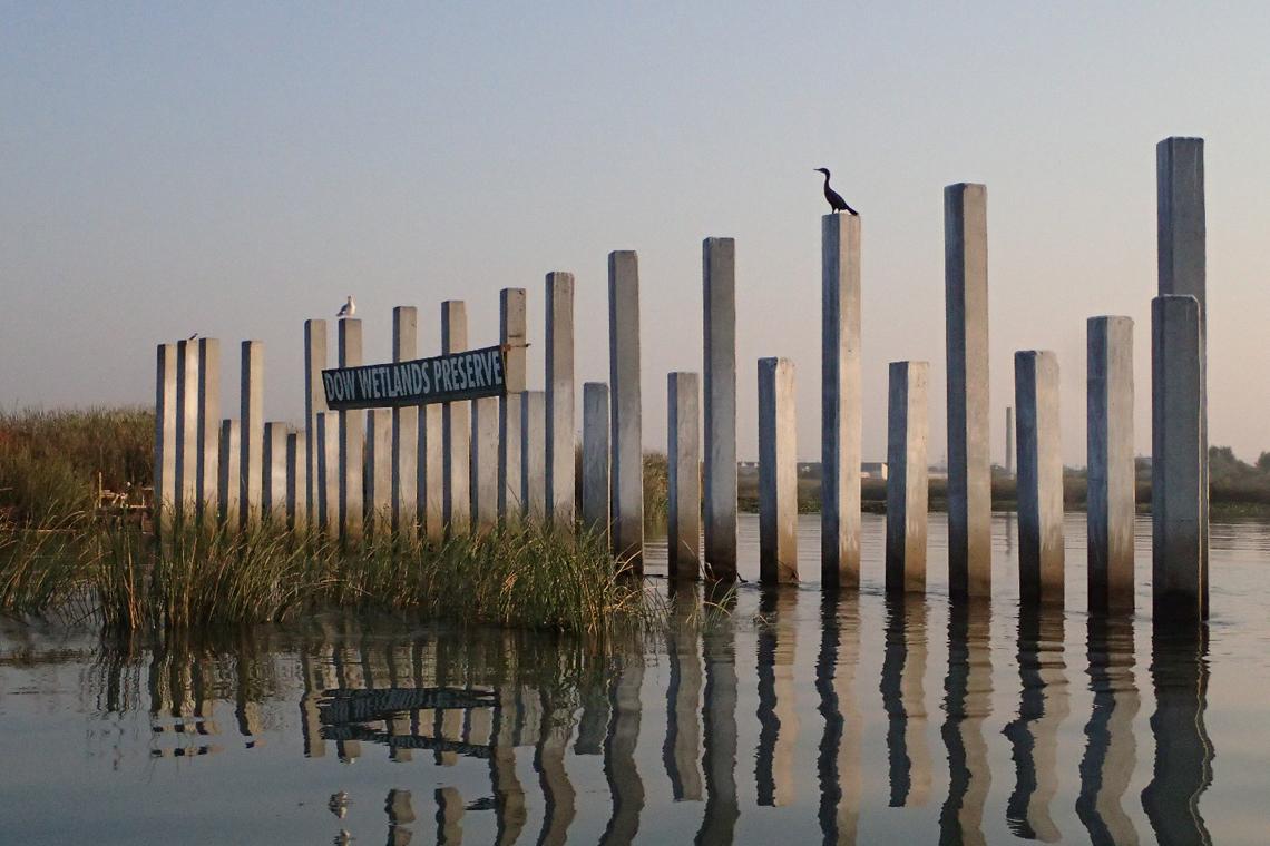 dow wetlands 001