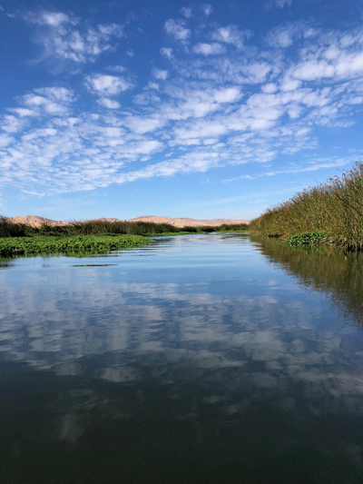 dow wetlands 002